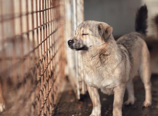 Chine : Ouverture du festival de la viande de chien à Yulin