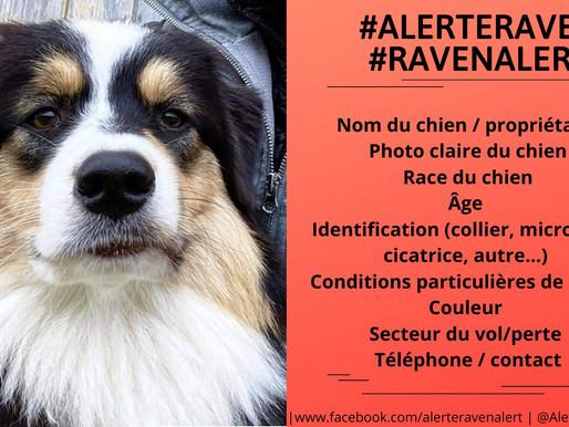Alerte Raven: faire la lumière sur les disparitions de chiens