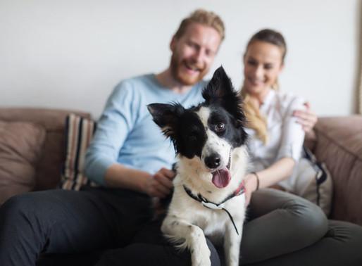 Les avantages d'adopter un animal en famille d'accueil