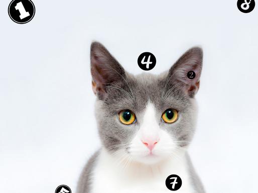 Les chats en chiffres