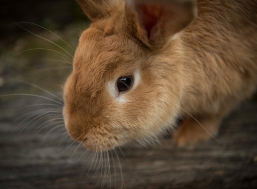 Le lapin : 3e animal le plus populaire..et abandonné