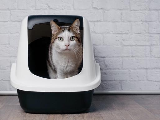 La malpropreté & le hors litière chez le chat