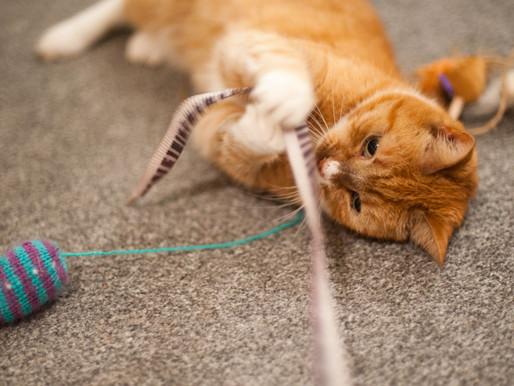 Partie 2 : Cause et solutions des problèmes de comportement chez le chat