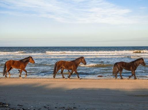 L'énergie du cheval