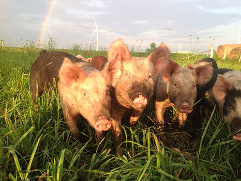 Reservation DEPOSIT 1/2 Pig