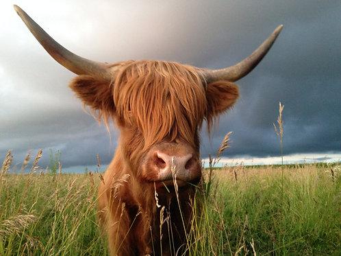 Reservation DEPOSIT 1/2 cow