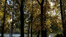 Plantar árvores e mudar práticas agrícolas podem reduzir emissões de carbono