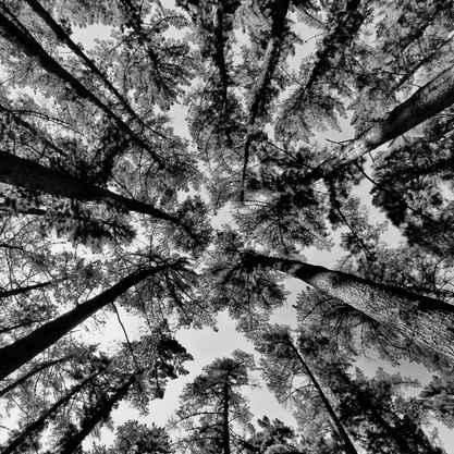 Newlands Forest I