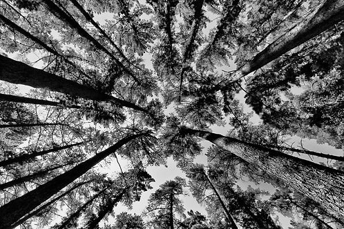 Forest & Veld