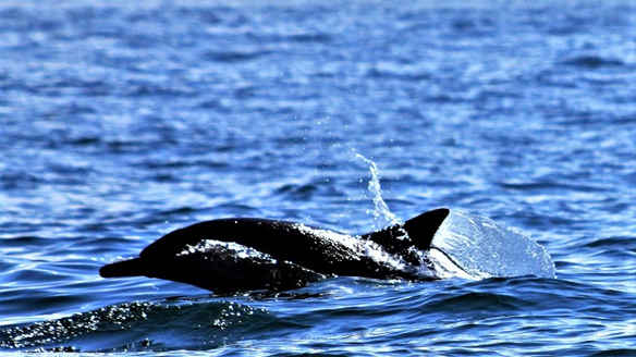 Bottlenose Dolphin photography in south africa