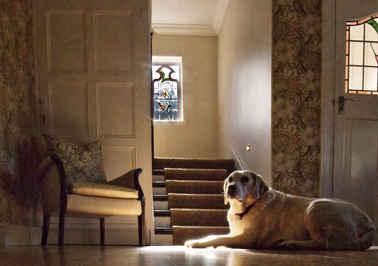 Dog photography by Peter Krainhofner