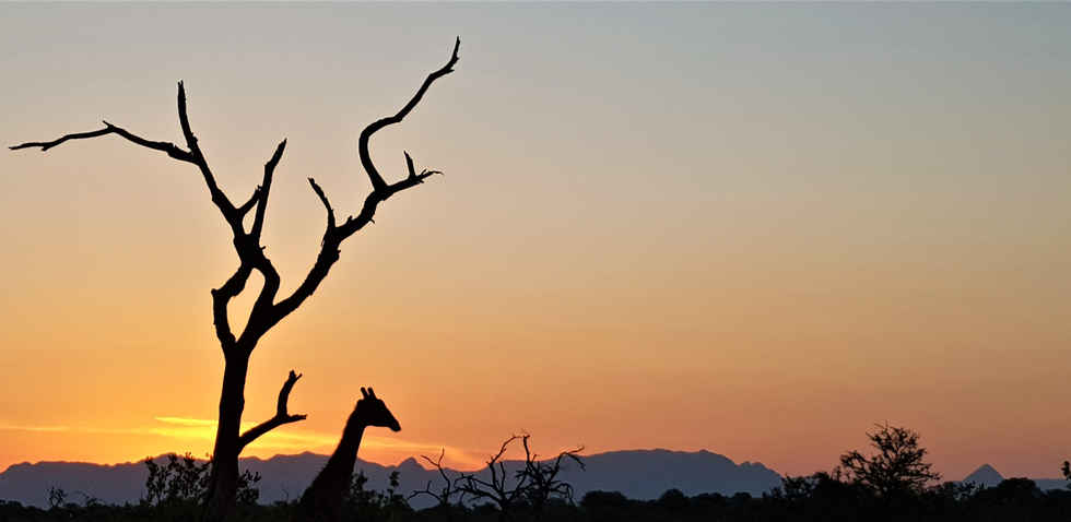 Iconic Africa: wildlife photography in south africa