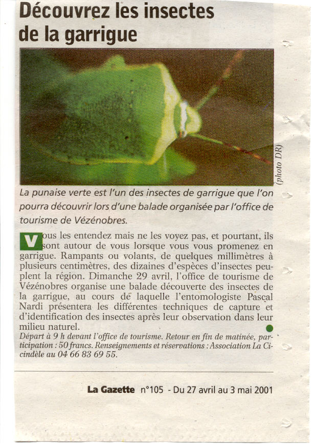 insectes garrigue2