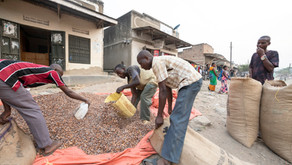 Episodic Food Insecurity: A Proposed Solution via Agricultural Cooperatives
