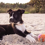 Puppy na plaży