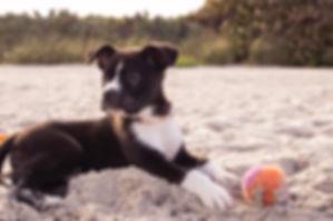 Puppy on the Beach