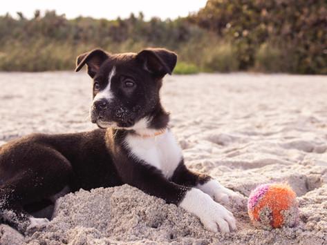 Quelles sont les plages de Seine-Maritime qui autorisent les chiens ?