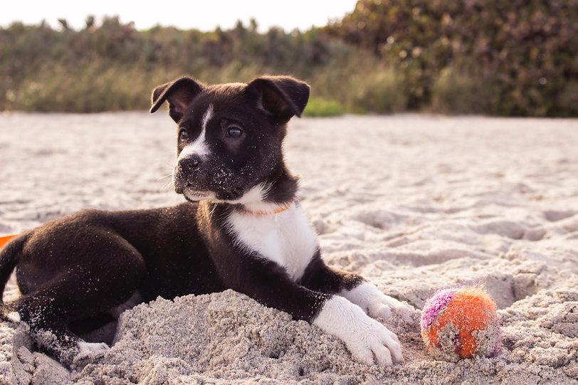 Filhote de cachorro na praia