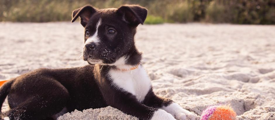 Emmener votre animal à la plage