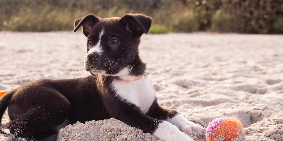 Puppy Training Class- Newtownabbey (6th October)