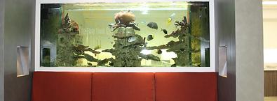 Fish tank waiting room
