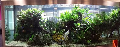 fish tank aquatic plants