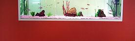 Aquarium in wall