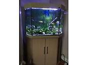 Home aquarium.JPG