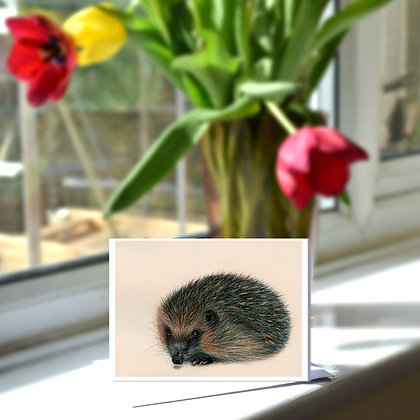 Hedgehog Greetings Card