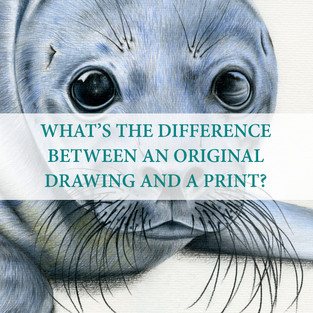 Oh, I love this question! So, Faber-Castell Polychromos coloured pencils are oil based. This means you get a wonderful shine on an original drawing. Once completed, I scan my drawings in at a high resolution to ensure all the lovely detail. I will then edit and clean up the scanned in version on Adobe Photoshop. From there I am able to print the drawing onto plain, white 160gsm paper. A lot of people often think I print onto textured paper, but it is all from the scan in.