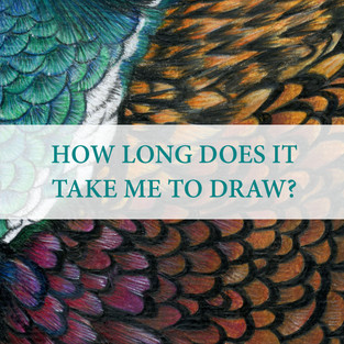 This is something I am frequently asked. Like anything in life, it takes time and practice. An A4 drawing back in school would take me forty hours to complete! An A4 portrait now can be anyway from fifteen to twenty-five hours depending on the subject. That might not seem like a long time but that's with ten years of drawing experience behind me now.  Certain pet breeds and animal species take me longer to draw because of the layers of colours involved. Not to mention, the size of the pencil strokes that can also take longer. For example, a shorthaired black dog could have seven maybe eight layers of dark greys and browns before I add the black coloured pencil. Also, as a one-woman band, I can't just sit drawing for ten hours of my day as much as I would love to! I have to be the admin administrator, editor and graphic designer, social media executive, customer liaison, personal accountant, as well as the chief tea maker.