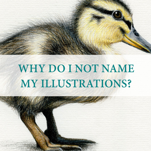 I loved flicking through Animal Encyclopedia's as a child. Maybe it is the scientific Illustrator in me, but I would like to think of my work as educational, including Animal Species names as well as being aesthetically pleasing.