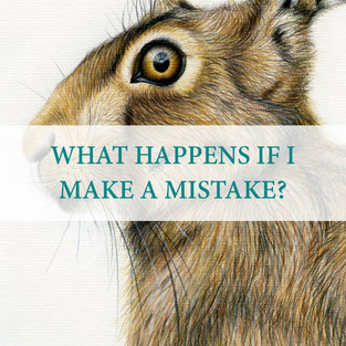 Another frequent question that I am asked, and I get it, mistakes do happen. Especially when we are talking pencils and paper, it is inevitable and a massive part of the creative process. I work in layers starting from light to dark to ensure fur, for example is going in the right direction. I also have a range of rubbers from your standard office ones to hard, pencil shaped rubbers to rub away smaller areas.