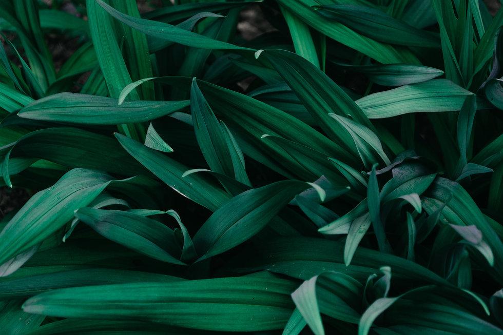 macro-photograph-of-grass-1090977.jpg