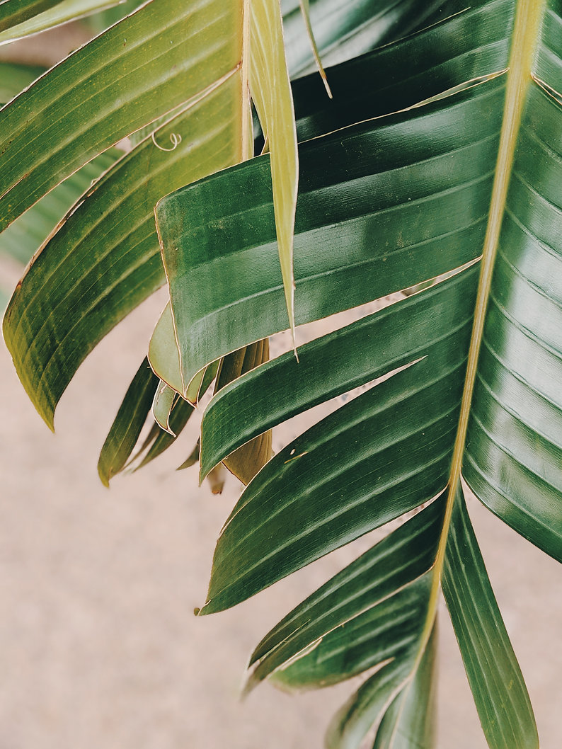 close-up-photo-of-banana-leaves-2516653.