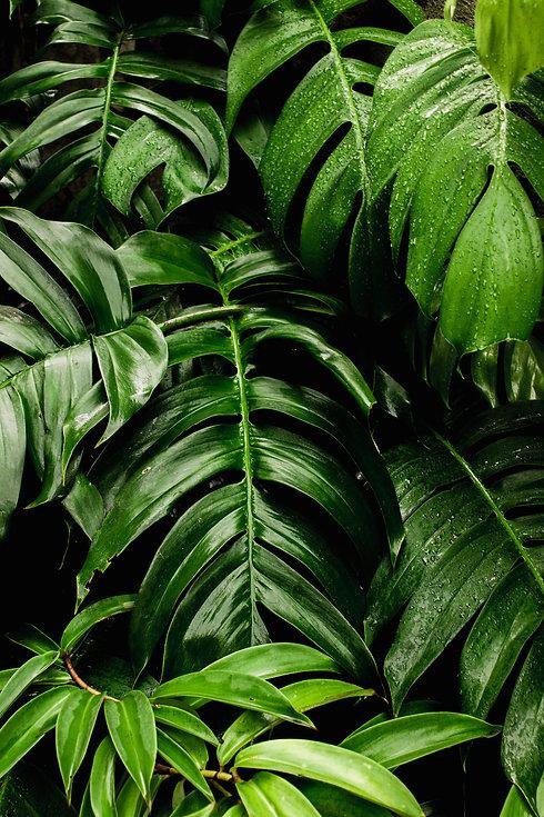 photo-of-green-leaves-3571551.jpg