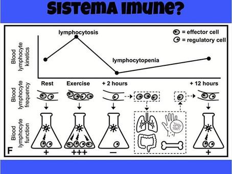 Como o Exercício Físico interfere na Imunidade?