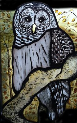 owl.color.jpg