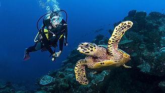 dive-with-turtles.jpg