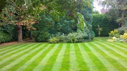 The Garden Professional