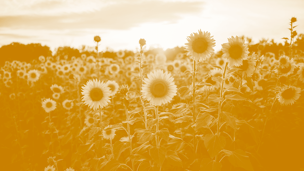 background-sunflower.png