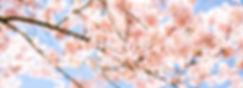 katie-moum-3FVeCbX6OrY-unsplash_edited.j
