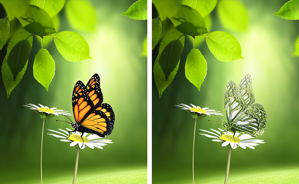 Two images of a butterfly, one of which has been transformed to appear transparent using Photoshop.