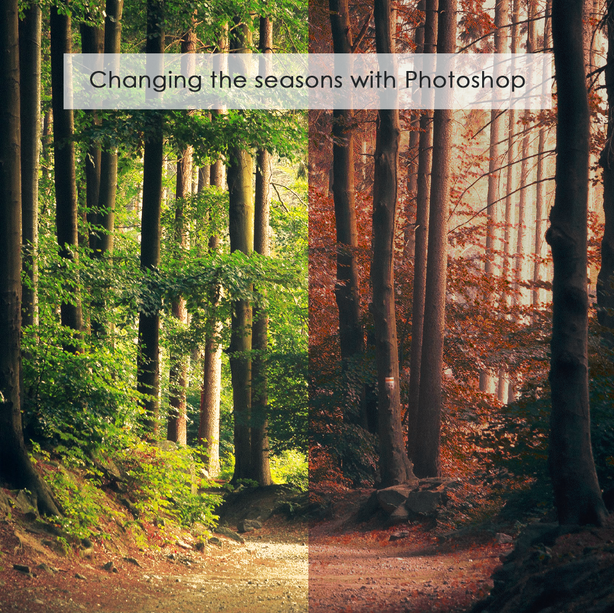 Changing the Seasons Blog Post