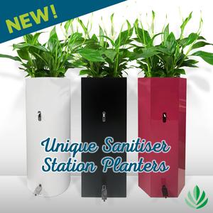 Image designed for blog post about hand sanitiser planters.