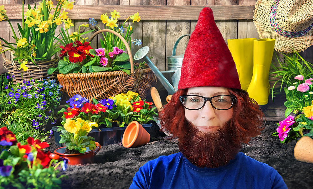 Image of Nome Jenkins turned into a Gnome and placed in a colourful garden, created using Photoshop.