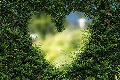bianca-mentil-heart-1192662_1920-pixabay