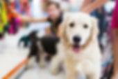 BRISBANE PET SITTING | BUY MORE TIME