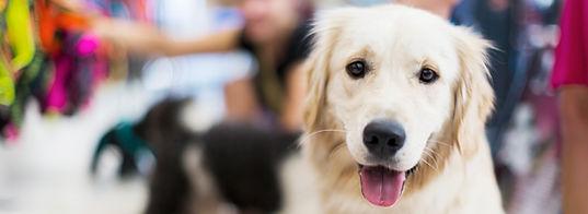 Pawsome Dogs - Dog Training Consultations Perth