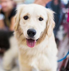 Happy dog ready for training
